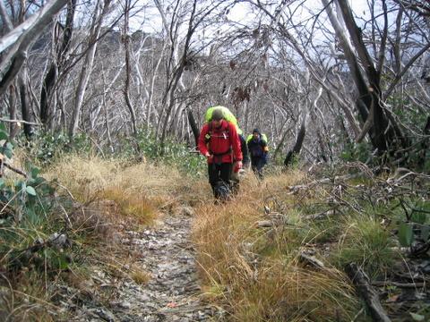 2004 BSAR Mt Buffalo search