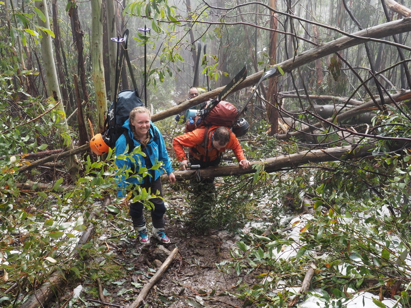 2017 Bogong search - track to Michell hut